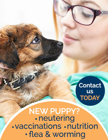 New puppy advice banner