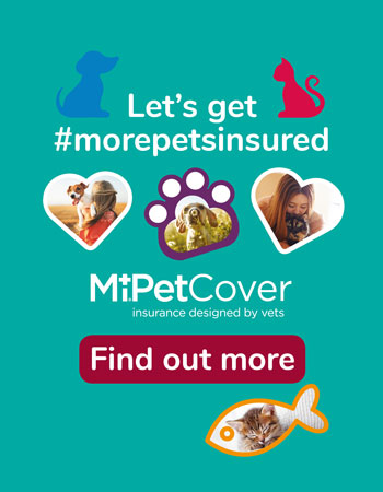 Let's get more pets insured