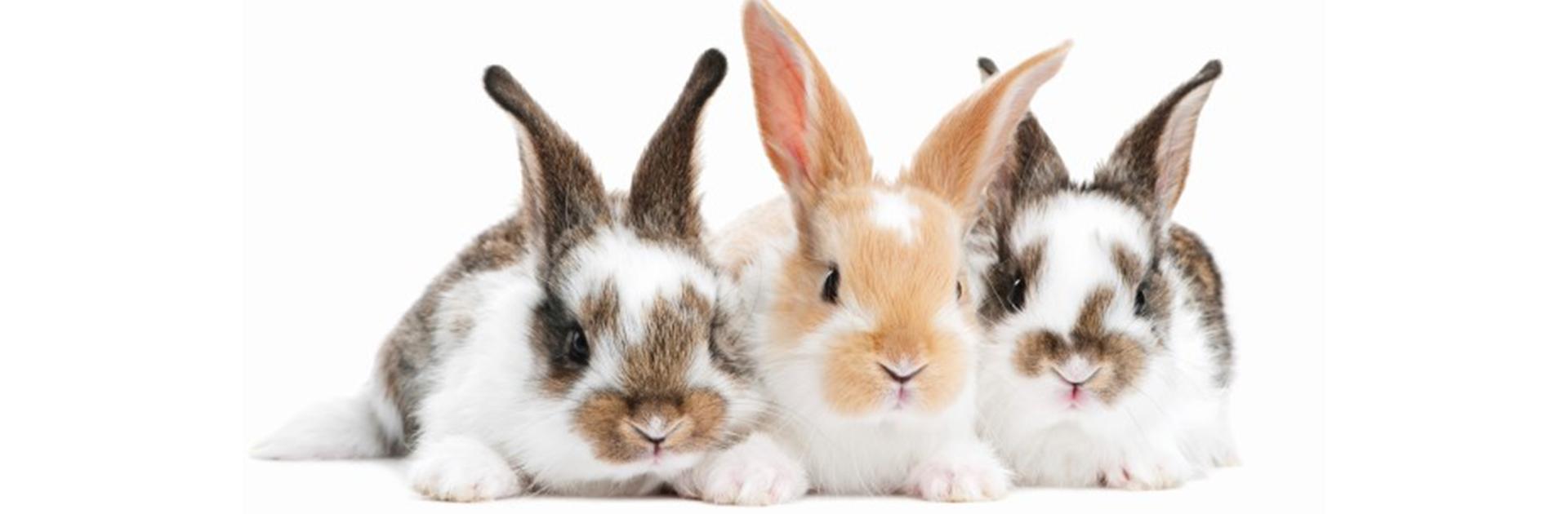 Rabbit banner for MS2